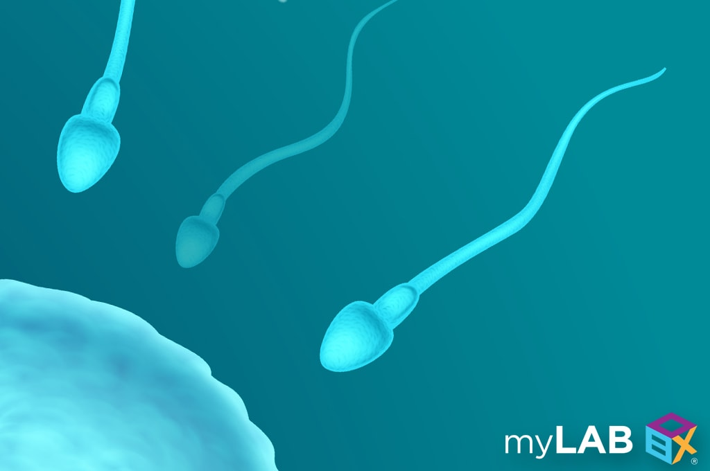 ways to increase sperm count